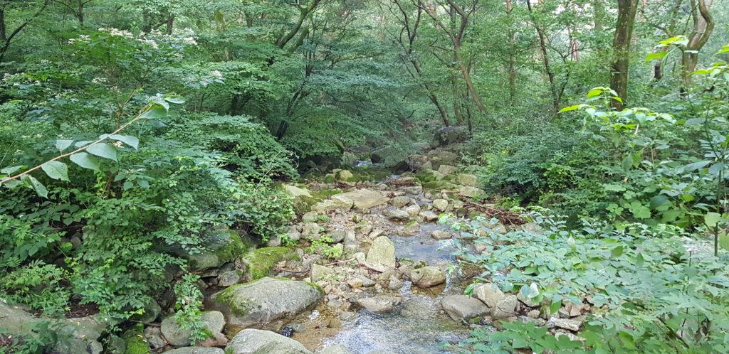 chemin de randonnée et ruisseau